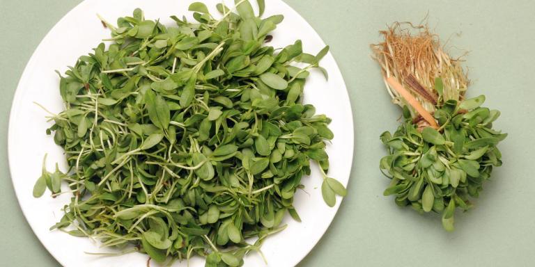 Fenugreek, Botanicals Help Diabetes